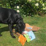 Emmy investigating her first WufWuf box
