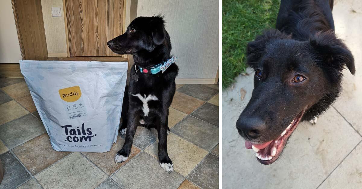 A dog named Buddy posing next to his Tails.com food bag